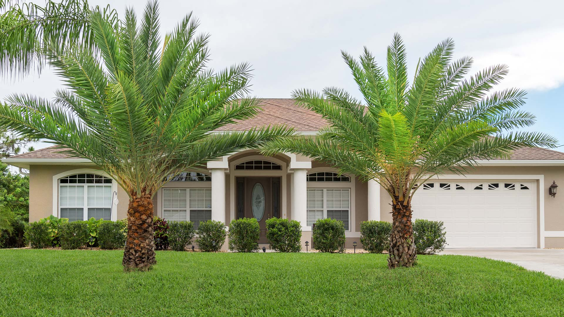 Healthy palm trees that we care for through regular maintenance in front of a home located in Encinitas.