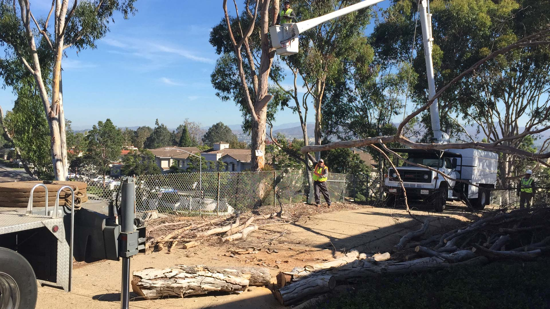 Large tree at a residential property in Rancho Santa Fe, CA we were contracted to remove.