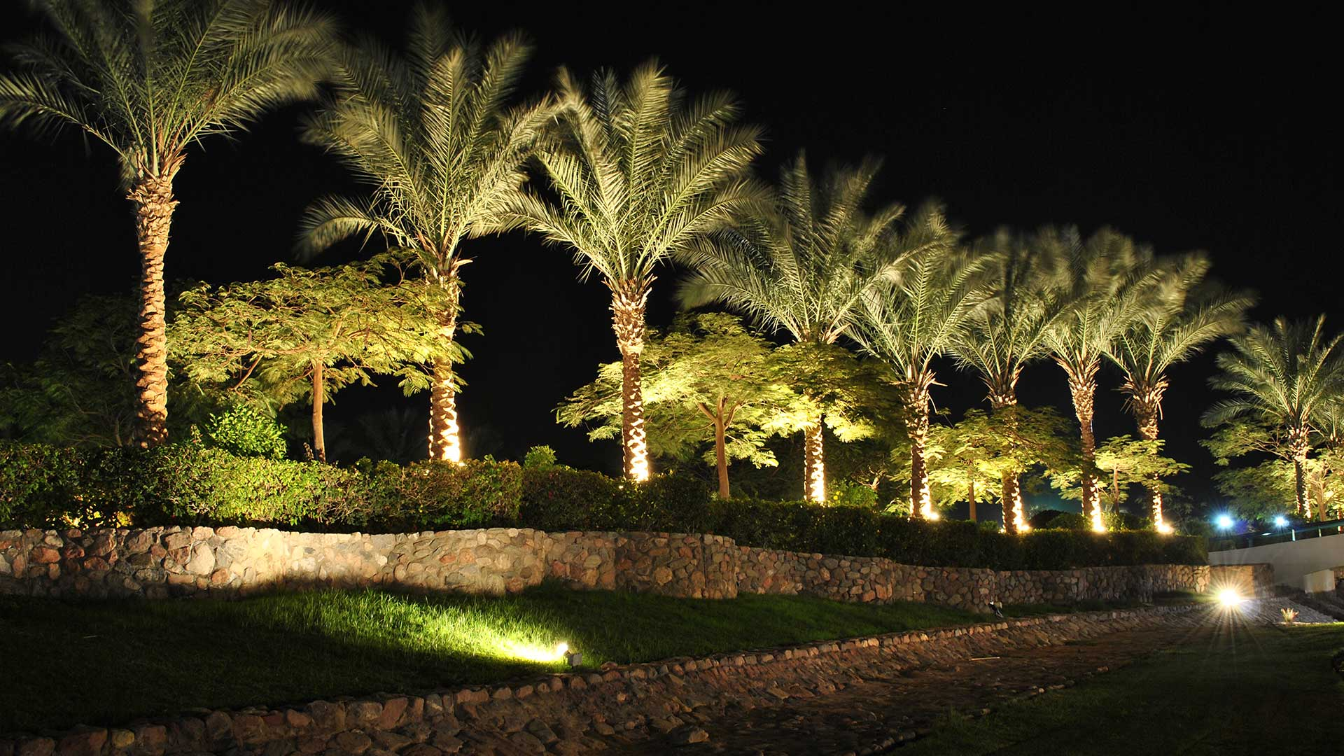 Palm trees spotlighted by LED outdoor lighting in Rancho Santa Fe, CA.