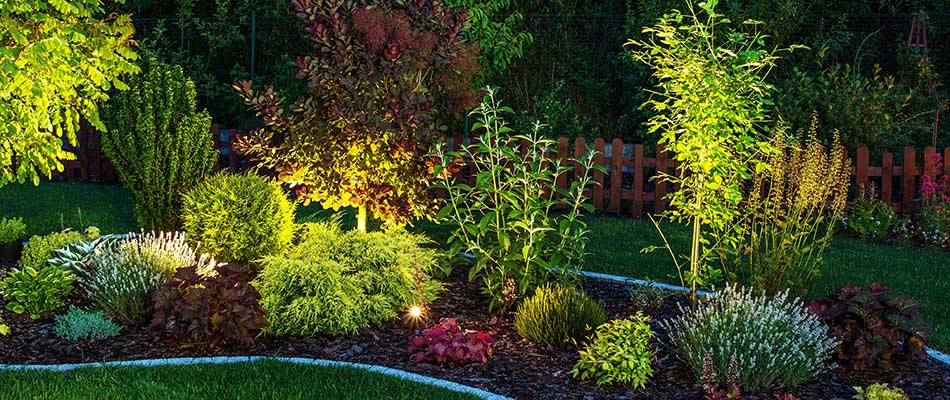 This landscaping is highlighted with outdoor lighting in Encinitas, CA.