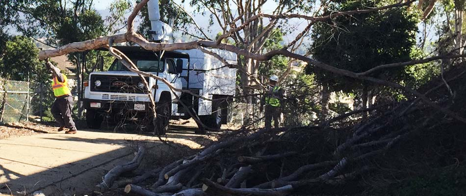 Our team removing a large tree and all disposing of all the debris from the tree.