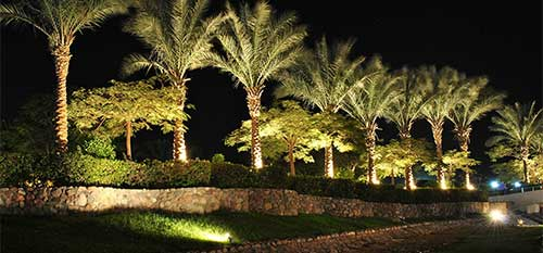 Outdoor landscape lighting on palm trees at a Carlsbad, CA property.