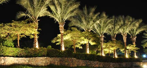 Palm trees and landscaping shrubs that we installed up lighting to draw focus to the palms at night.