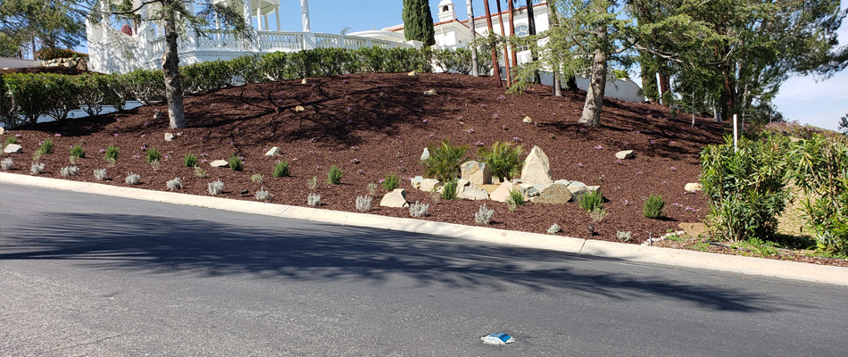 New mulch and plant installation after tree and brush clearing.