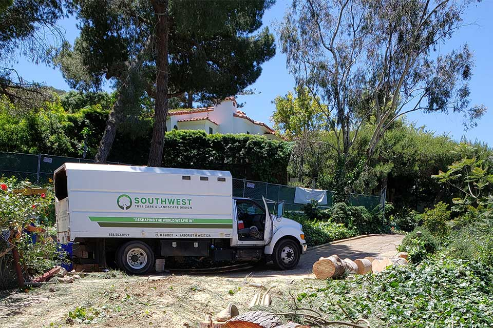 Certified arborist working on a tree in Rancho Santa Fe, CA loading truck with clippings.